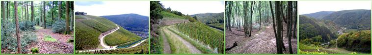 Durch die Wälder der Grafschaft zu den Weinbergen der Ahr