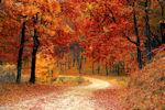 Herbstwanderung des VFG Meckenheim