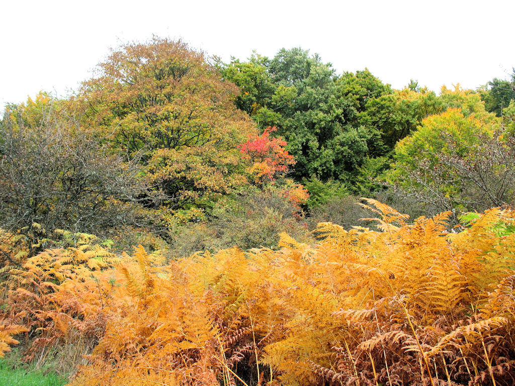 Herbstwanderung 2015 des VFG Meckenheim