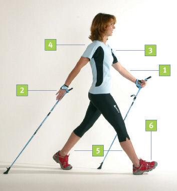 Nordic Walking Grundschritt